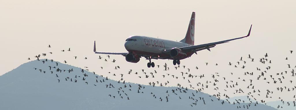 Avifauna en el espacio aéreo